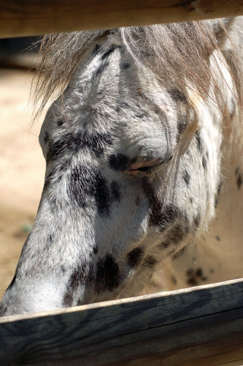 sad_horse
