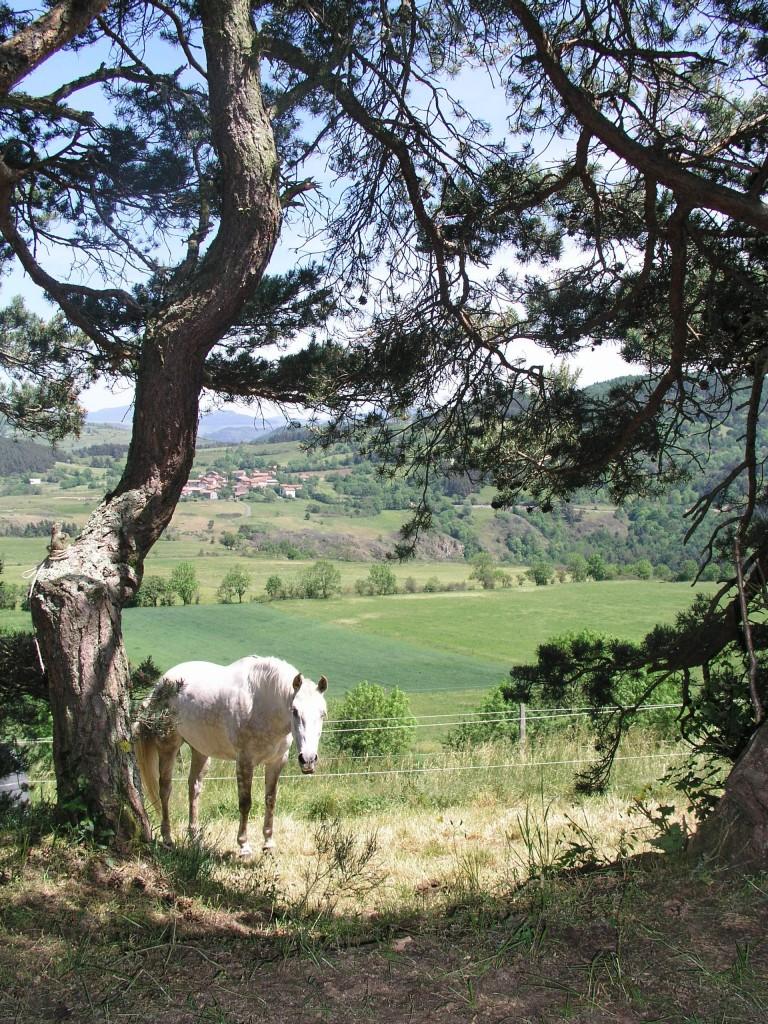 pine_horse_loire