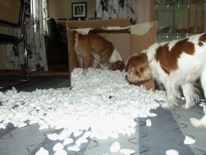 Mina hundar letar godis i frigolitfyllningen...